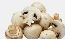 jamur pantangan asam urat