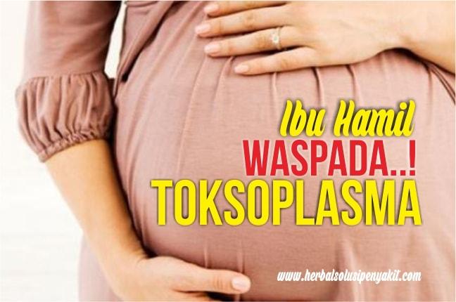 ibu hamil waspada toksoplasma