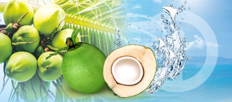 manfaat air kelapa biojanna