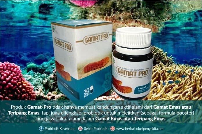 gamat emas probiotik double manfaat